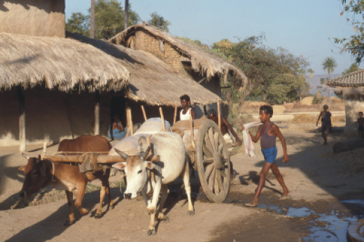 A bullock cart in an Indian village