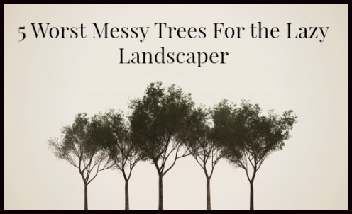 5 Worst, Messy Trees For The Lazy Landscaper