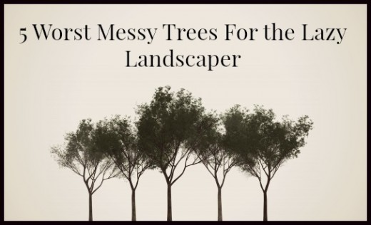 5 Worst Messy Trees For the Lazy Landscaper