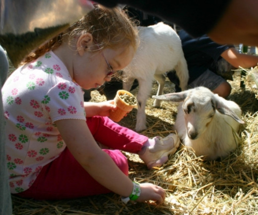Bishop's Pumpkin Farm Wheatland CA petting zoo