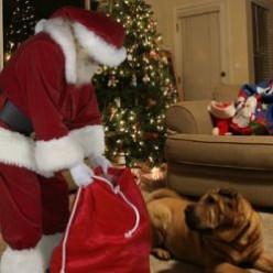 Get a Picture of Santa in Your House