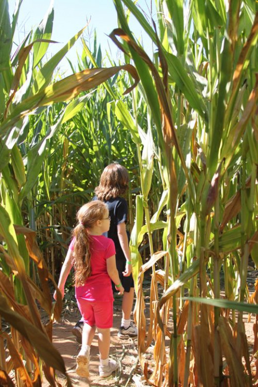 If you go into the corn maze, expect to be in there for awhile! Even if you can answer the clues, it's still a challenge.