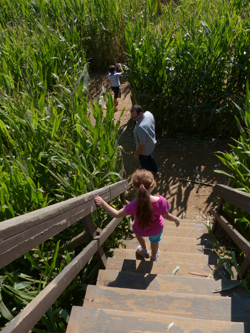 A wooden bridge is your key to getting out of the corn maze... but there are two bridges! So don't relax until you know which one you've reached!