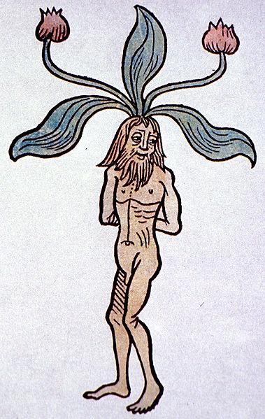A mandrake, from: Jacob Meydenbach: Hortus sanitatis, 1491