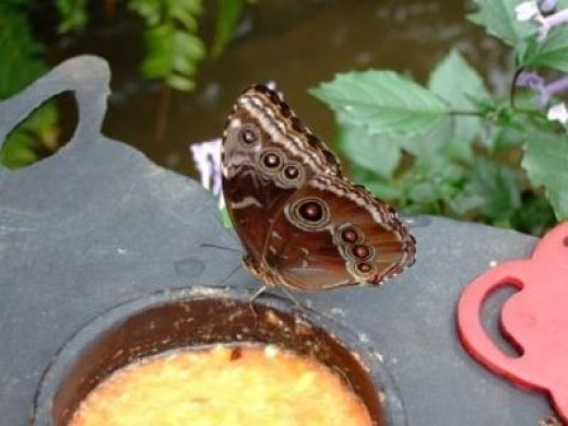 Same Butterfly with Wings Closed!