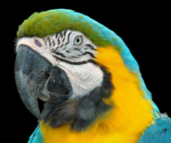 Understanding Your Parrots Body Language