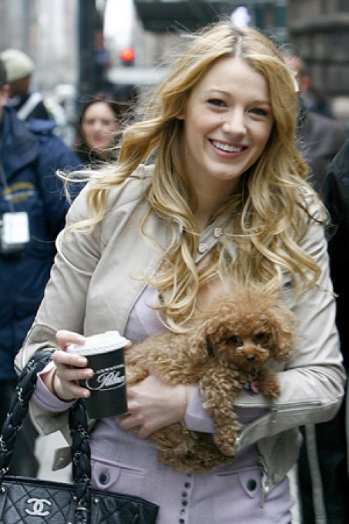 Blake Lively takes her dog Penny, a maltipoo, to the set of Gossip Girl with