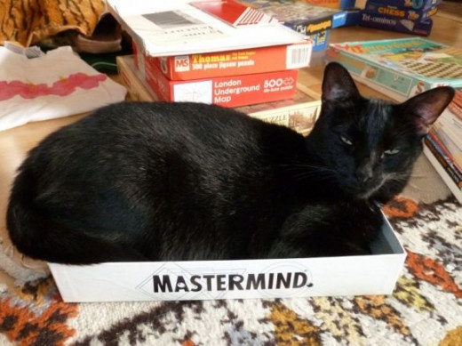 Cat Mastermind