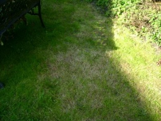 Patch Of Grass Means A Lot To A Chicken Or Hen