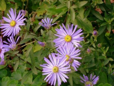 Still Beautiful Flowers Around In Autumn