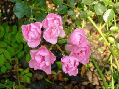 Stunning September Blooms...