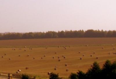 Harvest Time In September