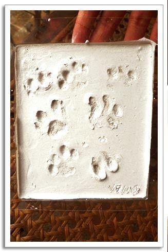 paw print making final step