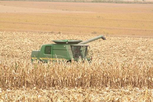 John Deere combine in the fields