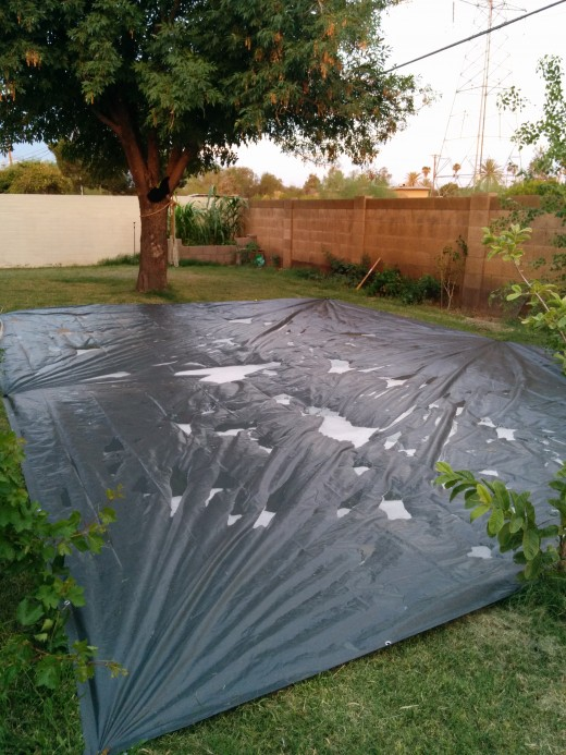 Although this is a Giant slip and Slide I made for the day, If you look into the background you can see the small garden I built and the Corn stalks towering above!