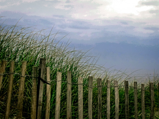 Sand dunes, sea grass and weather fences, where ever you turn is beauty.