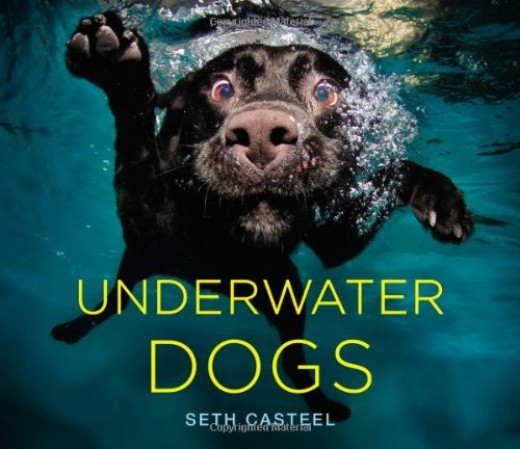 Underwater Dogs by Amazon