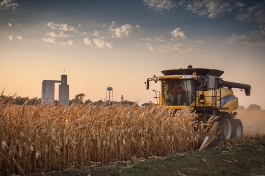 Photo journalism 2013, received a purple ribbon of my corn harvest photo