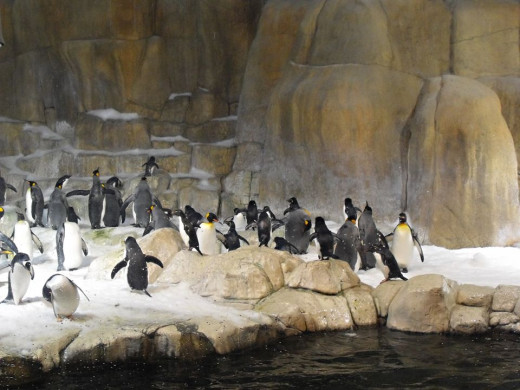 Penquin exhibit, it real snows in there!