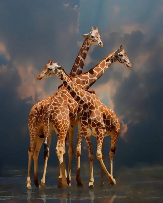 Giraffic Fantasy
