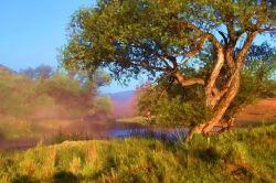 Morning Mist On The Shasta
