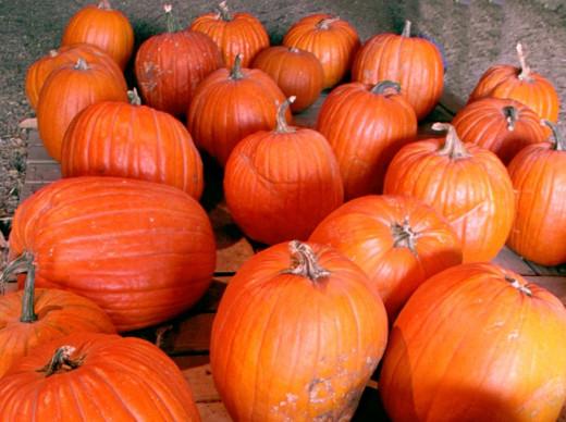 Halloween Pumpkins at the Farm