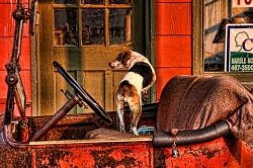 1915 DODGE AND DOG