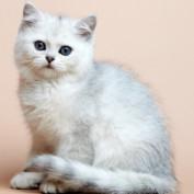 HelloKittyCat profile image