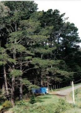 My caravan in the Aussie bush (note the blue waterproof tarp)