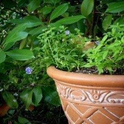Large Outdoor Urns and Decorative Planters