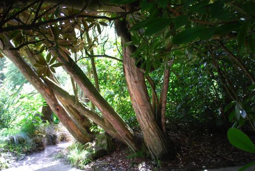 Tree specimens.