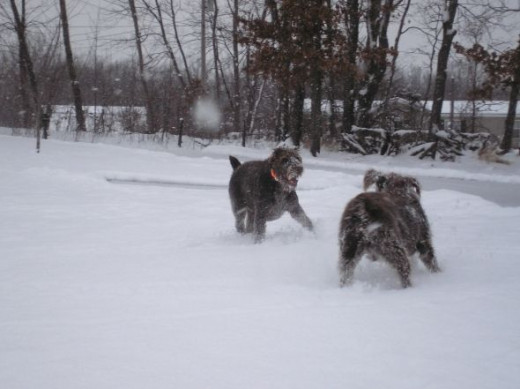 JACK & JOEY ROMPING IN THE FIRST SNOW OF THE SEASON