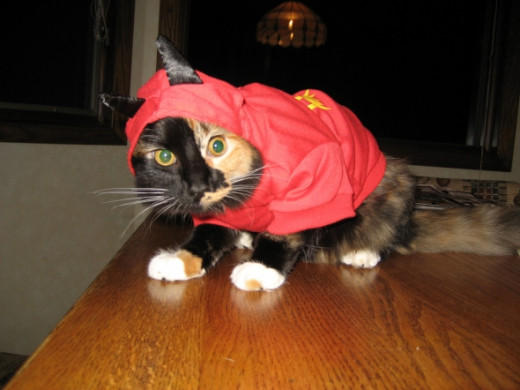 Cats aren't always as enthusiastic about Halloween as their People