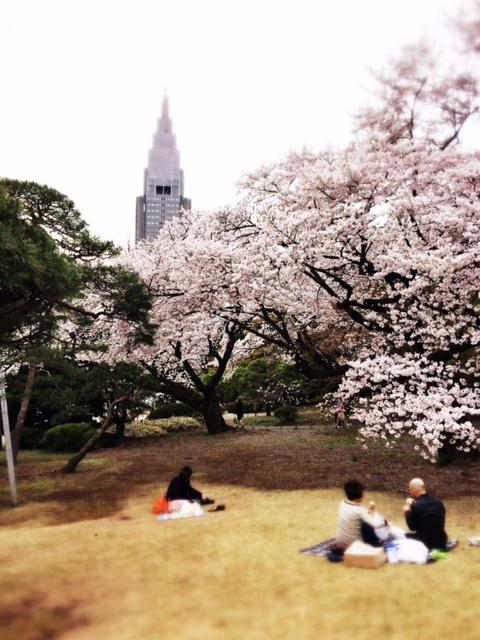Sakura in Shinjuku Gyoen
