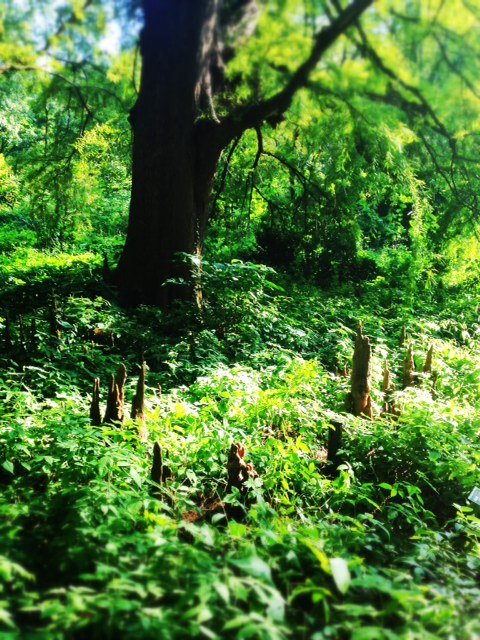 The forest is filled with living things.