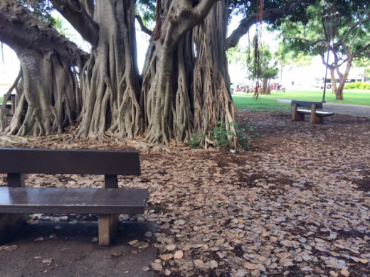 Parks with ancient banyan trees are perfect for sitting or having an impromptu picnic.