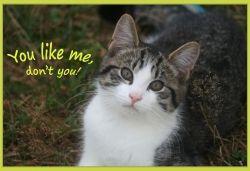 I Are Cute Barn Kitten - Robin
