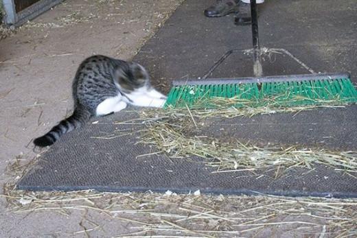 Stoppin Mum sweepin