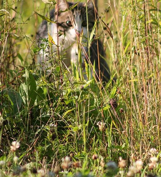 Hiddn in lng grss