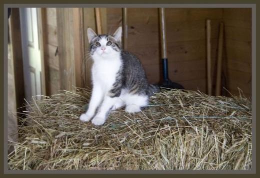 Makin su Mum n Dad can't get no hay