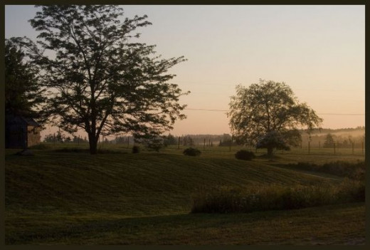 The Main Field As Seen From The Stable At 6:30am on an August Morning