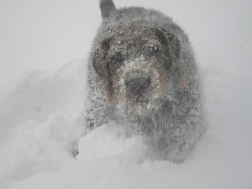 Joey loves the snow