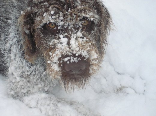 Joey's close up with snow in his beard