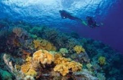 sulawesi-snorkeling.jpg