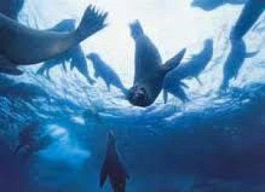 galapagos-snorkeling.jpg