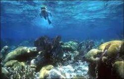 belize-snorkeling.jpg