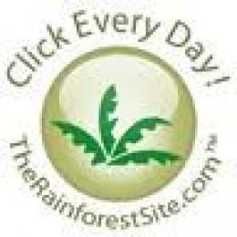rainforest-site.jpg