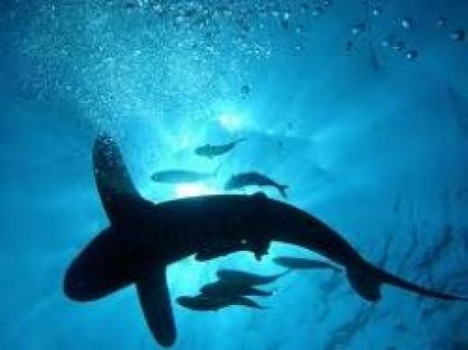 egyptian-red-sea-diving.jpg