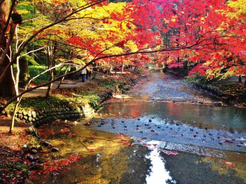 Japan autumn scene