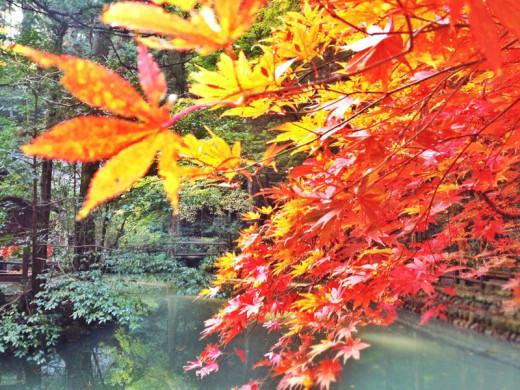 Autumn Leaves at Okuni Shrine